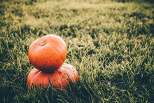 Two Pumpkins On Field Grass Background. Thanksgiving Day. Colorful Holiday Postcard. Business Card. Banner. Halloween Symbol. Autumn Landscape. Farm Harvest Decor. Beautiful Vegetables. Useful Food