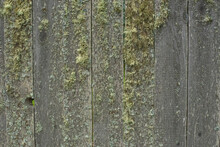 Wooden Fence Overgrown With Green Moss