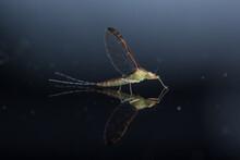 Ephemeroptera Background On Black Glass