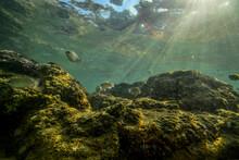Rocks On The Coast Of Indian Ocean On Sri Lanka
