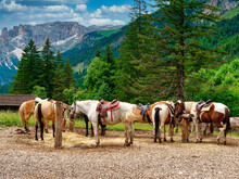 Horses In The Mountains In Summer