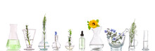 Panoramic Image Of A Laboratory Fresh Medicinal Plant And Flowers Ready For Experiment On White Background.