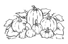 Vector Pumpkin Line Art, Outline Illustration For Coloring Pages, Coloring Book. Pumpkins And Gourds Different Sizes And Various Shapes.