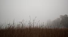 Niebla En Los Campos Cerca Del Lago Donde Los Arboles Desaparecen