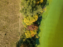 Yellow And Red Autumn Trees On The River Bank. Algae Bloom In The River. Sunny Autumn Day. Aerial Drone Top View.