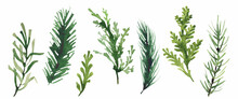Isolated Christmas Evergreen Branch, Leaves, Greenery, Fir Tree Etc. Traced Vector Watercolor Set. Hand Drawn Illustration Collection On White Background. Water Colour Drawing.