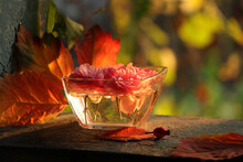 Pink Rosebuds In Glass On Old Window With Fall Leaves. Close-up On Natural Background Of Autumn Foliage.