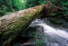 Fallen Tree Over A Rushing River In A Forest
