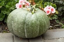 Natural Green Pumpkin