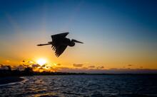 Great Blue Heron In Silhouette Flies Near Sunset In Florida.tif