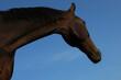 koń głowa