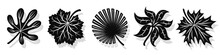 Set Of Vector Black Leaves Silhouettes And Shadow Isolated On White Background. Abstract Cartoon Leaf Or Foliage Flat Shape Icon Style. Design For Logo, Stencil Or Pattern Artwork.