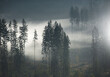 Jesienne mgły w lesie - Beskidy