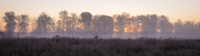 Autumn Landscape Fog Over The Meadow And The Rising Sun Behind The Silhouettes Of Trees