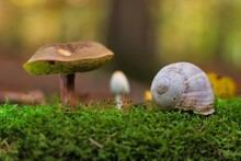 Mushrooms And Snail Shell In The Forest, Close-up
