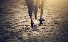 Equestrian Sport. Hooves With Horseshoes Of A Running Horse. The Legs Of A Dressage Horse Galloping, Rear View. The Leg Of The Rider In The Stirrup, Riding On A Red Horse.