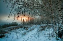 A Frozen Birch Tree Growing On The Edge Of A Ravine On A Cold Winter Evening Against The Backdrop Of A Sunset