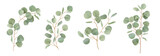 Eucalyptus vector watercolor floral set. Green leaf branches, Silver dollar greenery, natural leaves