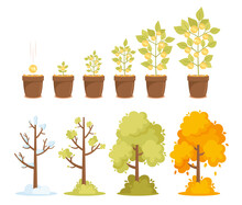 Money Tree Growth, Capital Gain And Seasonal Trees. Time Line From Small Sprout To Big Plant With Golden Coins On Branch