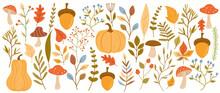 A Set Of Autumn Leaves, Herbs, Flowers, Pumpkins, Mushrooms. Fall Icons. Vector Illustration
