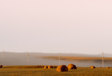 A Mown Field In The Rays Of The Rising Sun. There Are Many Round Haystacks In The Field. The Field Is Covered With Thick Gray Fog And Power Line Poles Are Visible. Copy Space.