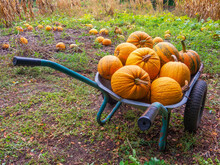 Garden Cart With Pumpking.