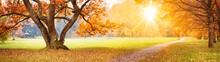Beautiful Oak Tree In The Autumnal Park
