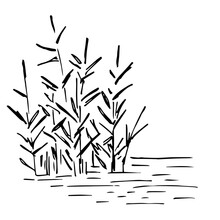 Simple Hand-drawn Vector Drawing In Black Outline. Lake Shore, River. Reeds In The Water, Swamp. Nature, Landscape, Duck Hunting, Fishing. Ink Sketch.