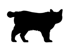 Manx Cat In Silhouette On A White Background