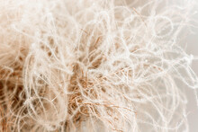 Abstract Feather Grass Closeup For Wabi-sabi Interior Design. Natural Fluffy Decoration For Cozy Minimalist Home, Earth Beige And Sandy Tones Backdrop
