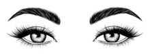 Hand-drawn Female Eyes. Attractive Woman Eyes. Black And White Sketch.  Fashion Illustration. Vector EPS 10.