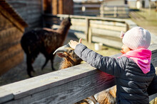 Little Girl Scratches The Head Of A Goat, Animal Care Farm