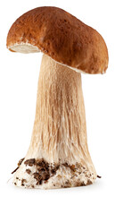 Beautiful Forest Mushroom Isolated On White Background. Cep. Package Design Element