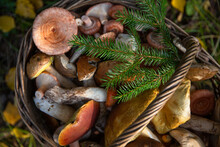 A Wicker Basket Filled With Wild Mushrooms On The Background Of Autumn Leaves