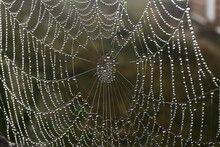 Beautiful Spiderweb With Morning Dew Outdoors, Closeup