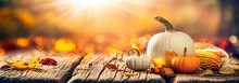 Mini Pumpkins, Corn And Leaves On Wooden Harvest Table With Sunlight - Thanksgiving / Harvest Background