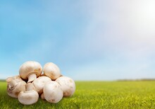 Fresh Ripe Mushrooms In The Forest On A Green Grass.