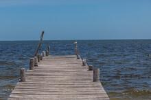 Muelle Con Gaviota