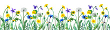 Horizontal Endless Seamless Floral Border In Botanical Watercolor Illustration Isolated On White Background. Dandelion, Cornflower, Aquilegia Flowers Pattern With Green Stems And Leaves For Decoration