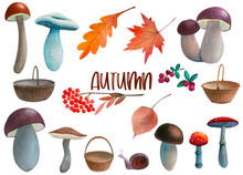 Hand Drawn Watercolor Set With Various Mushrooms, Leaves, Berries, Baskets On A White Background. Collection Of Natural Forest Elements