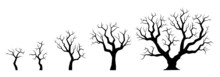 Naked Tree Silhouette Set. Winter Small And Big Trees With Bare Branches. Growth Process. Vector Illustration.