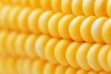 Macro Shot Of Raw Yellow Corn Cob.