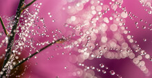 Dewy Spider Web - Net And Flowers - Macro Photography