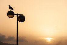 Seagull Resting On A Broken Street Lamp At Sunset