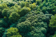 Top Down Flat Aerial View Of Dark Lush Forest With Green Trees Canopies In Summer.
