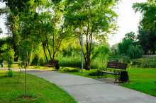 Summer Park, Benches Along The Footpath, Pedestrian Alley