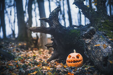 Jack O Lantern, With An Evil Facenear Fallen Tree Overgrown With Moss In Forest.. Carved Pumpkin For Halloween Night Woods. Halloween Evening Background With Place For Text