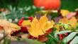 Piękne jesienne liście na trawie. W tle pomarańczowa dynia. Beautiful autumn leaves on the grass. Orange pumpkin in the background.