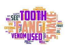 Fang Wordcloud Concept, Wordart, Fang,scary,halloween,mouth