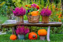 Autumn Garden Decorations. Pumpkins And Heathers On A Wooden Bench In The Garden.